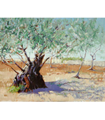 Ancient Olive Tree 20x16